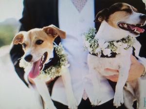 weddingdogs